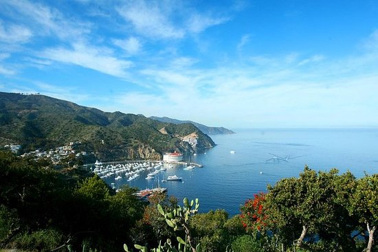 Dagtur til Catalina Island fra...