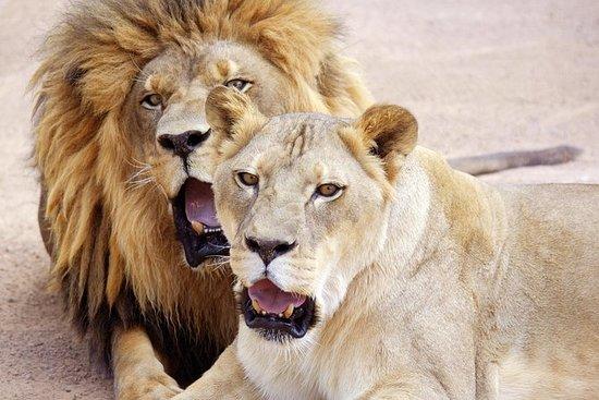 Lion Habitat Ranch: entrée générale...
