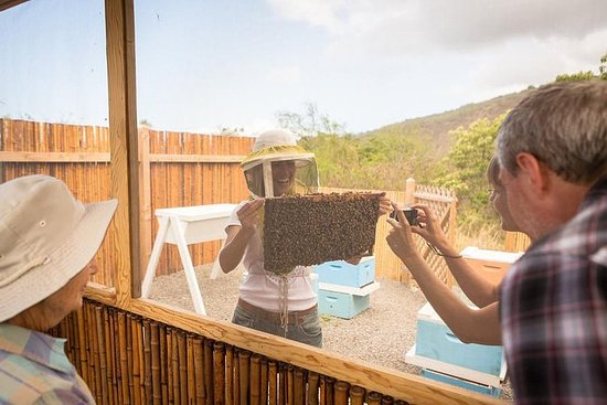 Kona: plantación de café, bahía de...