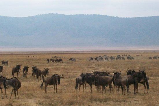 5日間のタンザニア予算キャンプサファリ