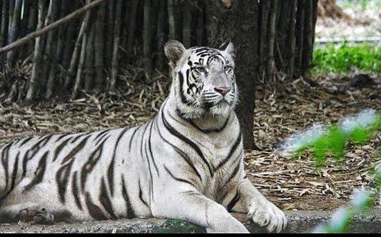 Tur til Arignar Anna Zoological Park...