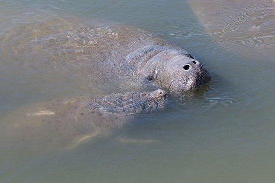 Dolphin & Manatee Kajakkpadling