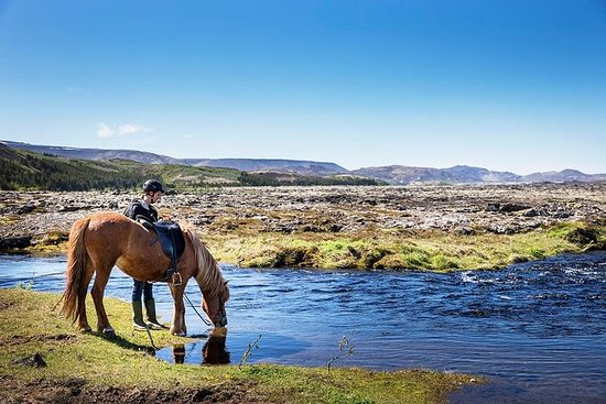 Icelandic Horseback Riding Tour from...