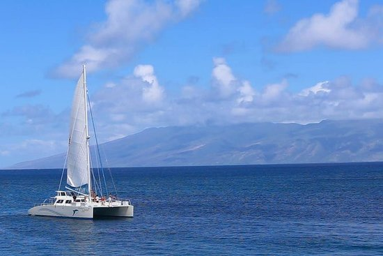 Whalewatch Sail fra Lahaina