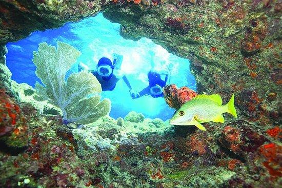 Snorkleeventyr ved levende korallrev...