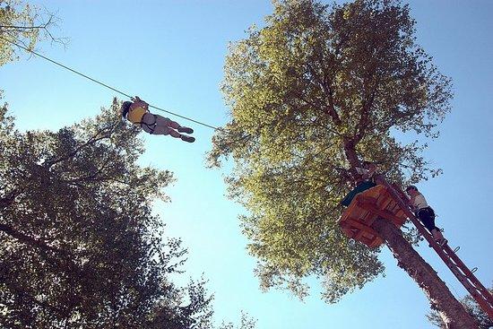 Ziplines di 2 ore e Adventure Tree