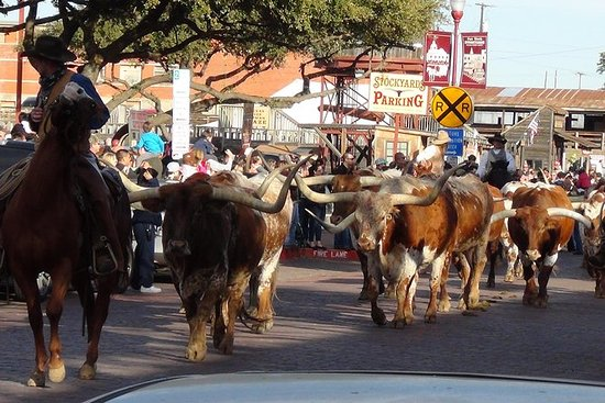 Half-Day Guided Best of Fort Worth...