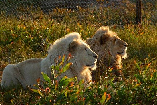 2-Hour Educational Visit at Panthera...