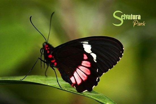 悬挂的桥梁 - 蝴蝶 - 从蒙特维多的蜂鸟