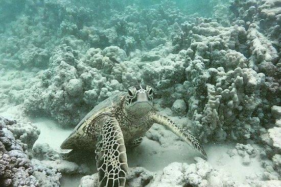 檀香山浮潜之旅