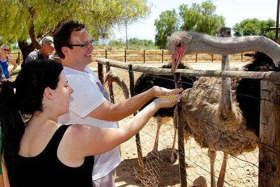 Highgate Ostrich Farm Tour