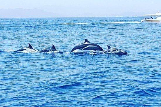 Delphin Uhr
