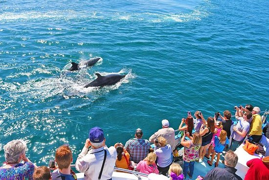 Mirissa Whales & Dolphin Watching Day