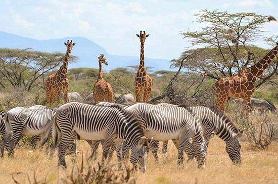 12 jours de safari au Kenya et en...