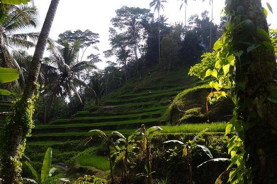 Private Ubud traditional and culture...