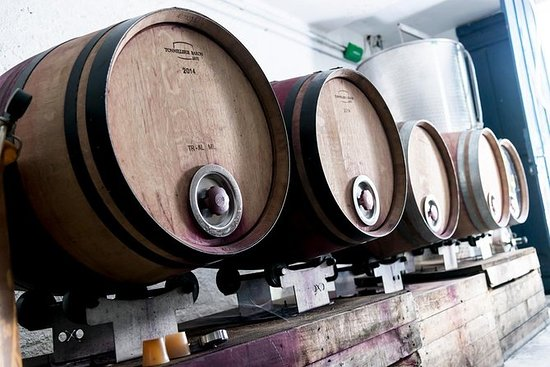 Discover the winery and taste 7 different wines of a small organic domain