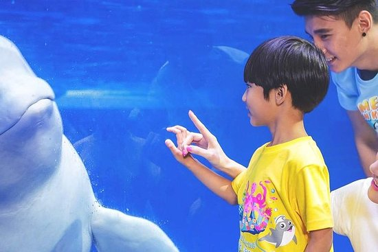 Chimelong Ocean Kingdom Park Dia da...
