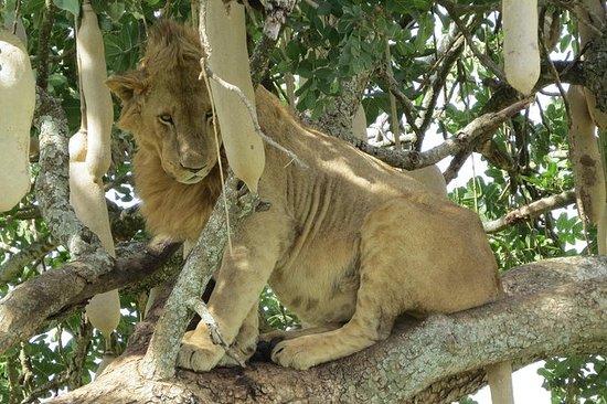 4 jours de safari sauvage dans le...