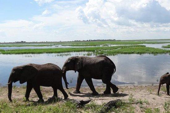 Hwange safari Daytrip