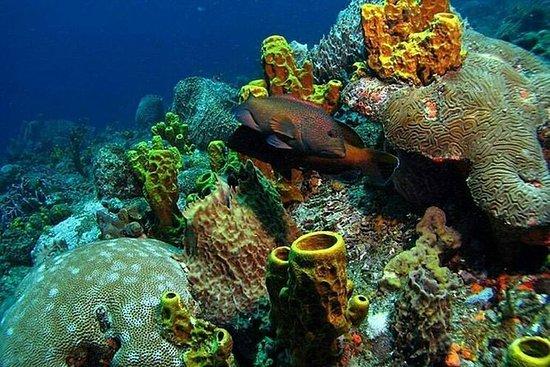 Tobago Buccoo Reef Tours