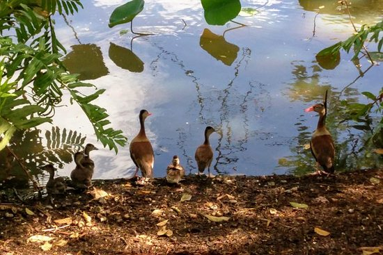 Layover Wild Fowl Experience