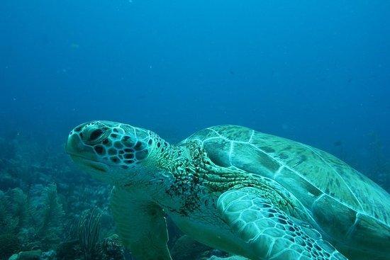 Half Day Snorkel tur til øen Lanai '