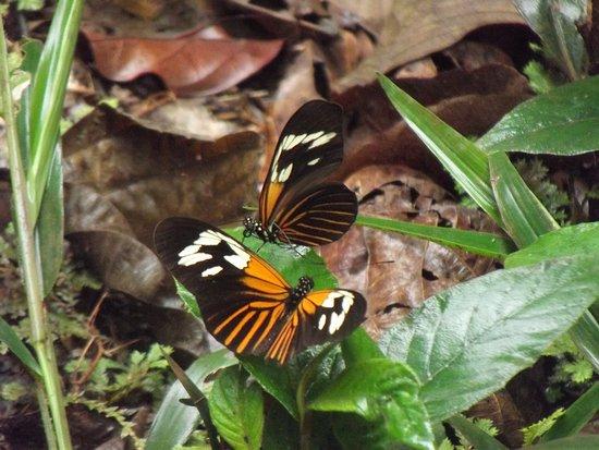 Amazon River Cruise Gil Serique - Day Tour: Monarch