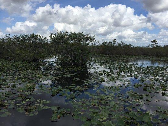 Everglades National Park: Anhinga Trail