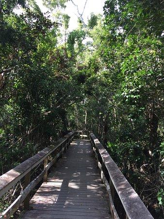 Everglades National Park: Mahogany Hammock