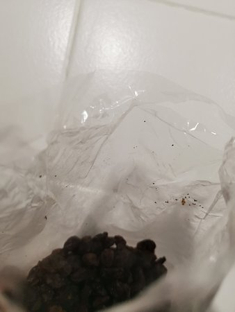 Kakamas, Sudáfrica: Visible residue from insect eggs and droppings inside the bag.