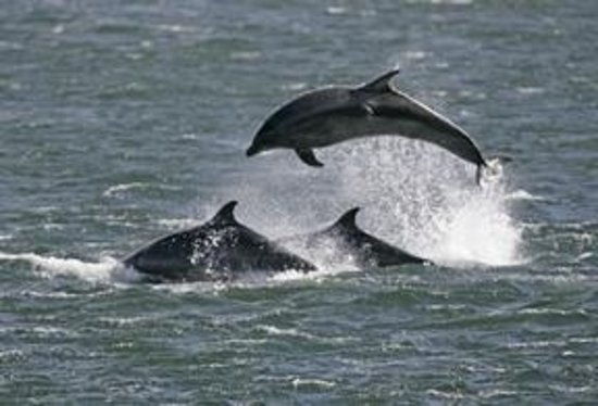 Portknockie, UK: Dolphins can be spotted from the cottage window over looking the Moray Firth