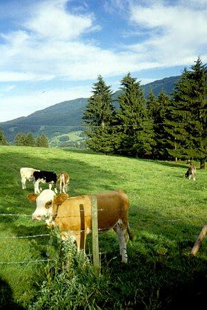 Oberreute, Germany: paesaggio bavarese