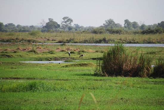 Bwabwata National Park, Namibia: in the swamps...