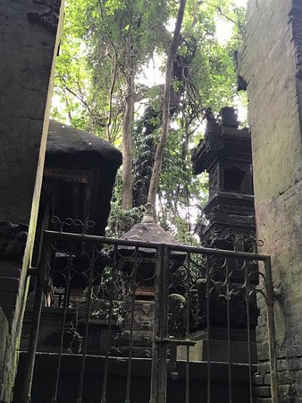 Tree tops and a view of a shrine