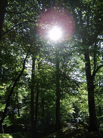 Als je even niet oplet tovert de zon je weg naar een sprookjeswereld.