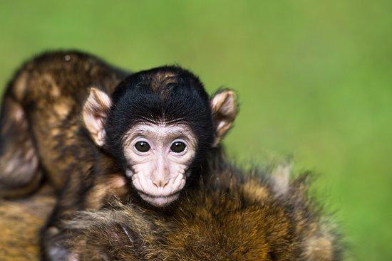 Affenberg Salem - Monkey Hill