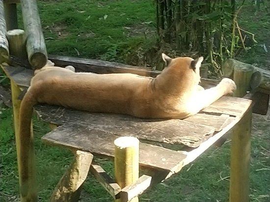 Фотография Zoo de Martinique - Habitation Latouche