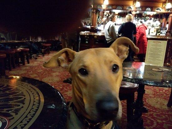 Dog Friendly pub - Picture of Guildford Arms, Edinburgh - TripAdvisor