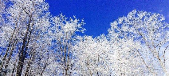 Nantahala Township, NC: Freezing winter fog in the Nantahala National Forest makes for a a frozen wonderland