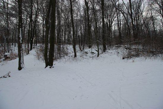 Bielany-Tyniec Landscape Park