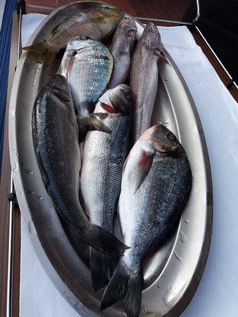 Palit, Croazia: Der frische Fisch