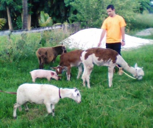 Happi Farm