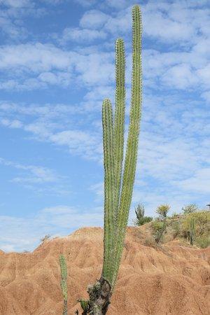 Vegetación asociada al desierto