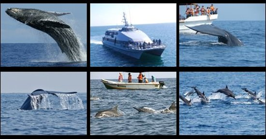 Whale Watching Mirissa 2020 All You Need To Know Before You Go