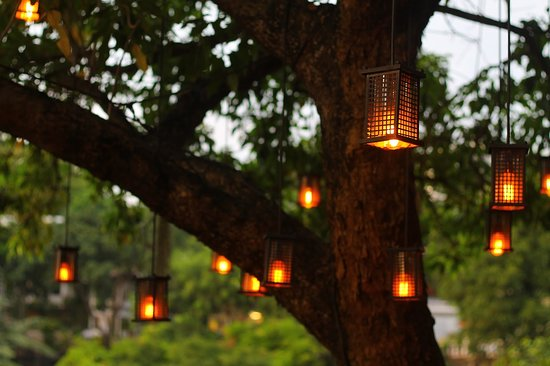 The famous Anzani Tree, it witnesses myriad romantic moments.