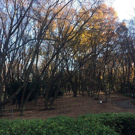 上野公园照片