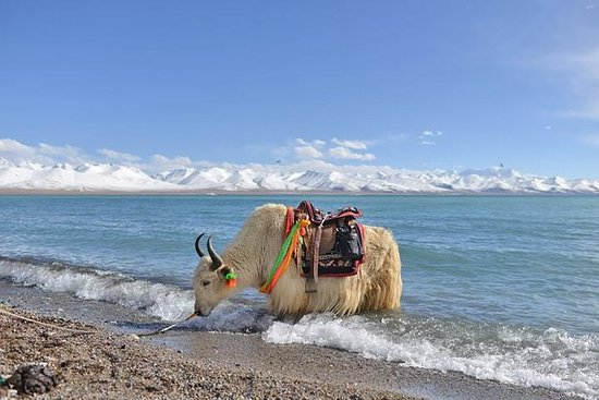 2-Day Small-Group Lake Namtso Experience from Lhasa