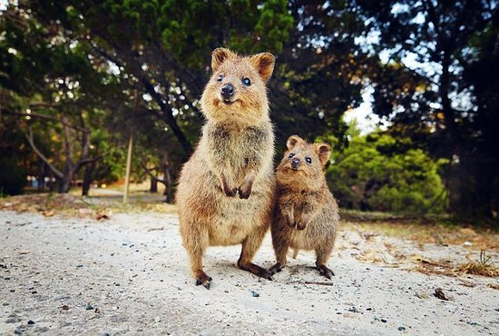 Rottnest Island All-Inclusive Grand Island Tour from...