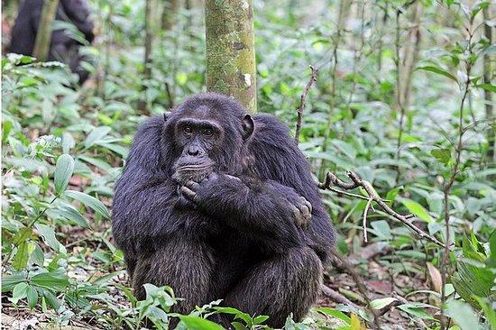 5 dager Uganda Primate Wildlife...