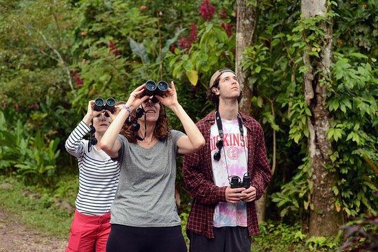 Rainforest Birding no vencimento do...